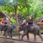 Luang Prabang-Seuang River homestay
