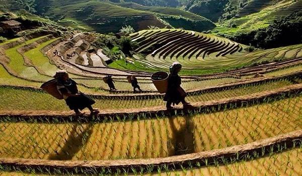 new rice terraced field